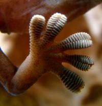 BTE untersucht gemeinsam mit deutschen und neuseeländischen Partnern biomimetische Haftstrukturen